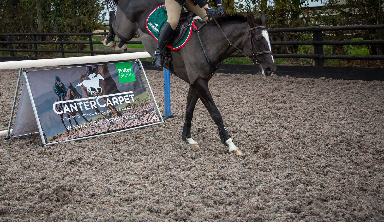 Horse Jumping onto Canter Carpet equestrian surface covered arena. Recycled carpet from Potter Group waste management in Welshpool.
