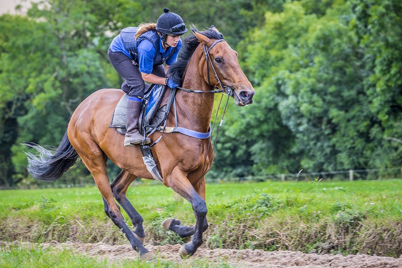 Rider and horse on gallops using Canter Carpet equestrian surface